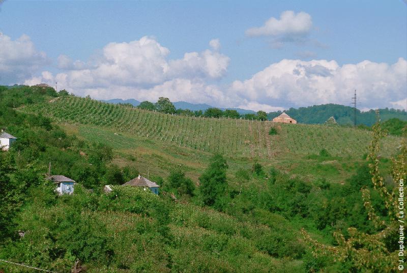 Сельскохозяйственные поля Сочи