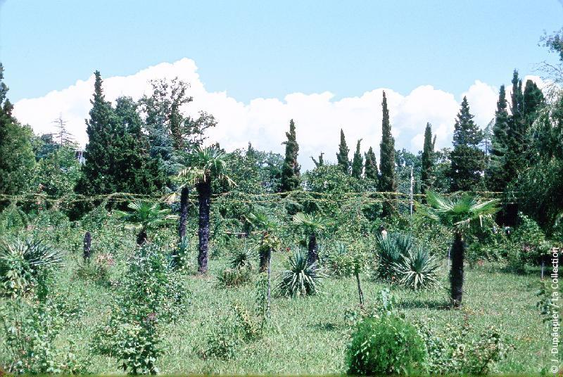 Растительность Сочи
