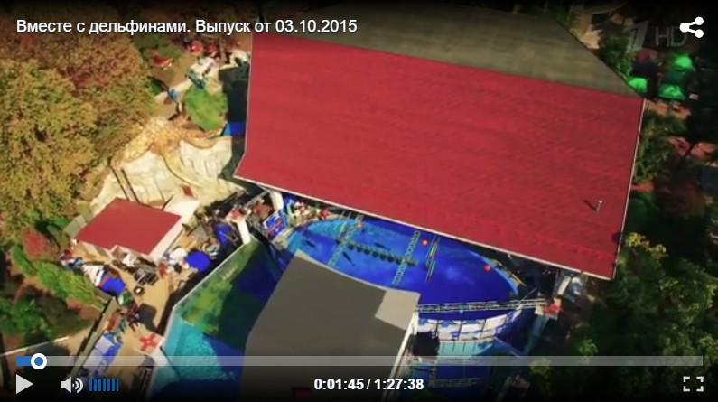 Дельфинарий в парке Ривьера: Шоу вместе с дельфинами