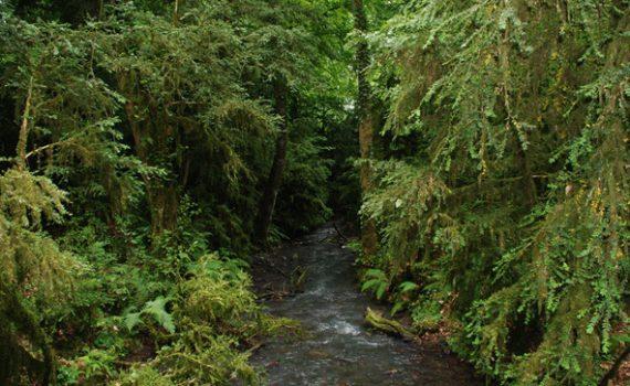 Самшитовые леса